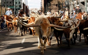 A heard of Texas Longhorn steers at an annual cattle drive in Denver, Colorado. Ranching is big business in the state.