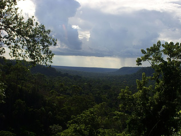 The Atlantic Forest is the second largest and second most biodiverse forest system in South America