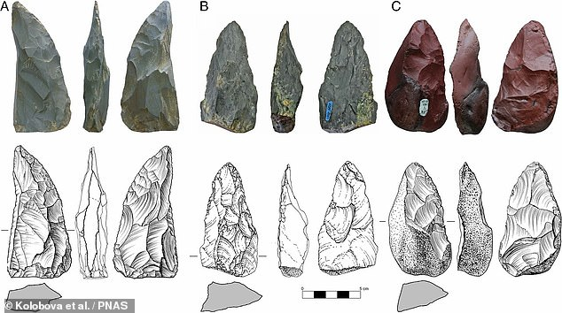 Stone tools found in a cave in Siberia reveal that nomadic Neanderthals made an epic trek of more than 1,800 miles from eastern Europe around 59,000 years ago. Pictured, the Micoquian-style tools unearthed from Chagyrskaya Cave in the Altai foothills
