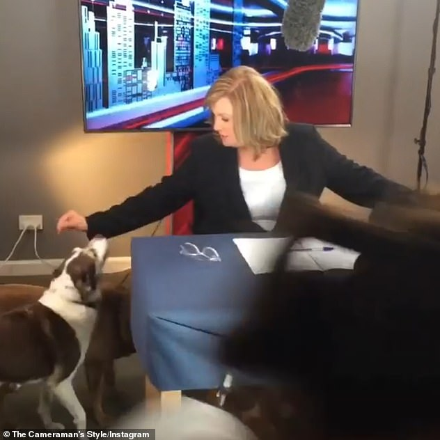 'Sit!' Tracy was also seen in footage shared to Instagram by a cameraman, attempting to get a number of dogs to 'sit' and behave