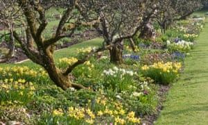 Spring borders with aged apple trees in Hergest Croft Gardens.