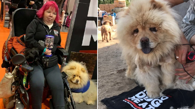 Mary and Annabel the chow who was rescued from the Chinese meat trade