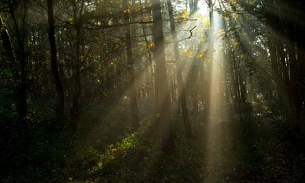 Sunlight filtering through trees, Harrogate