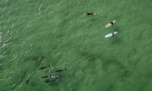Surfers and dolphins at Byron Bay, New South Wales