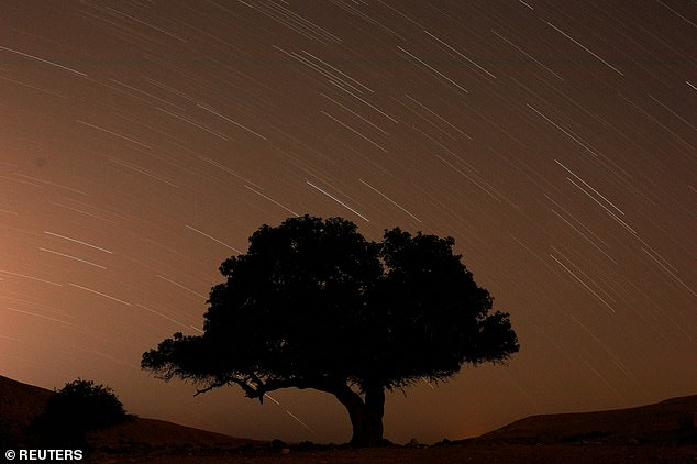 A long exposure shows stars behind a tree during the annual Perseid meteor shower near the town of Mitzpe Ramon, Israel