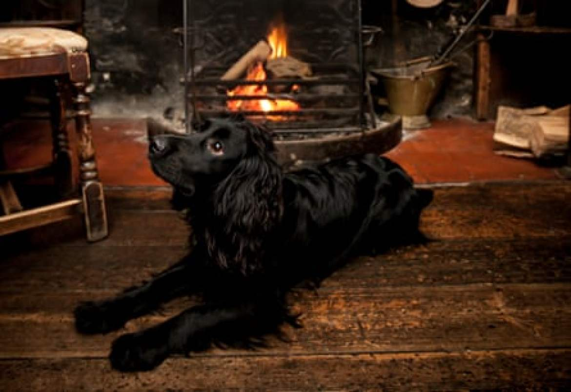 Harvey at The Cat Inn, West Sussex