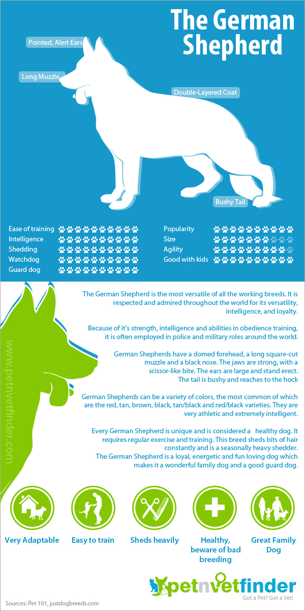 German Shepherd Infographic