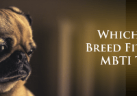dog-breeds-mbti