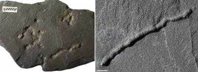 Συγκλονιστικές αποκαλύψεις! Η ζωή στην Γη πριν 2,1 δισεκατομμύρια χρόνια! | Newsit.gr