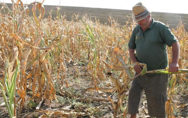 BT credite pentru fermierii care au culturi afectate de seceta