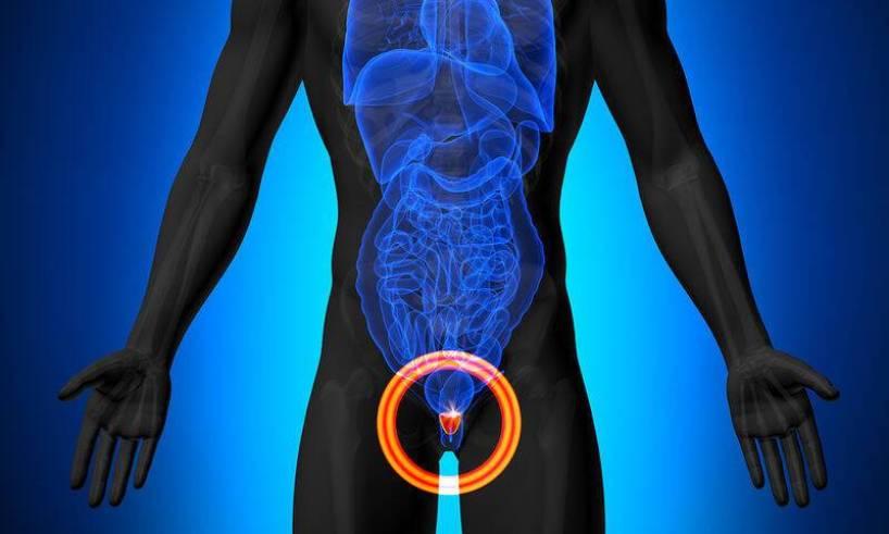 bigstock-Prostate-Male-anatomy-of-hum-66111301