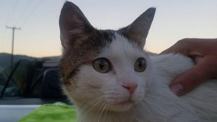 γατος