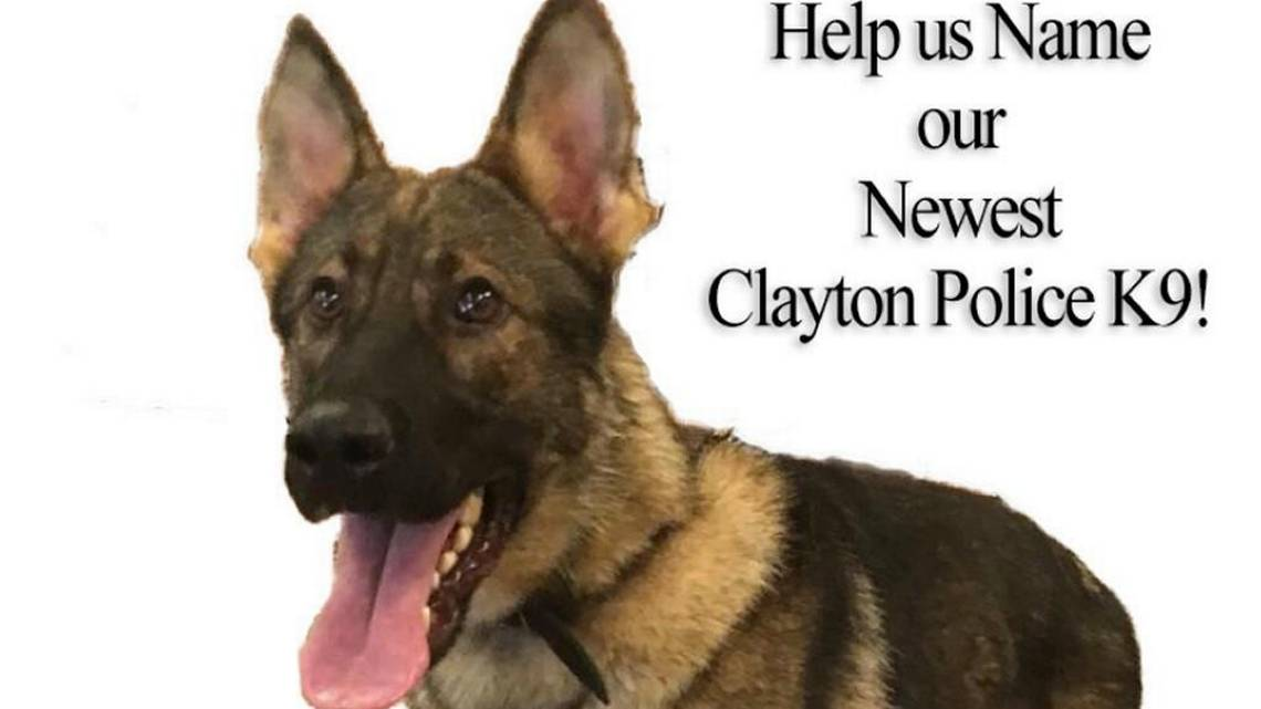 Clayton Names New K9 Police Dog After More Than 1000 Public Suggestions News Amp Observer