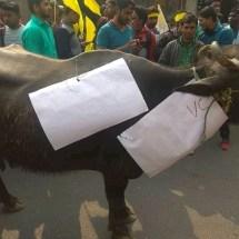 भैंस को बनाया बिहार विश्वविद्यालय का कुलपति, शिक्षा व्यवस्था को लेकर जताई नाराजगी।