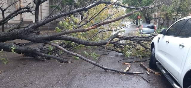 A fallen tree in Bahía Blanca. (Photo: TN and the People).