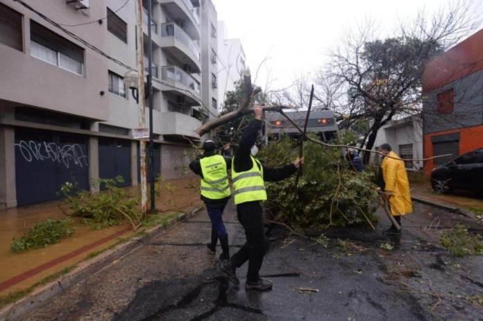Several falls of trees were recorded in the La Plata area.