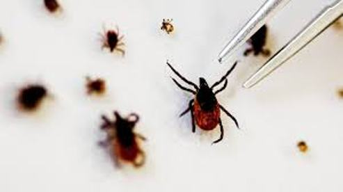 Seven  Dead, Sixty Infected As A New Virus, 'SFTS' Emerges In China