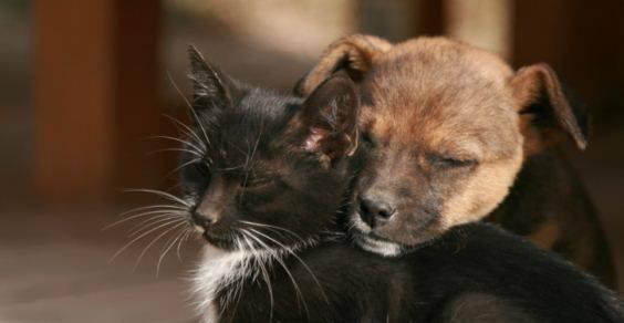 Risultato immagini per cane e gatto al canile