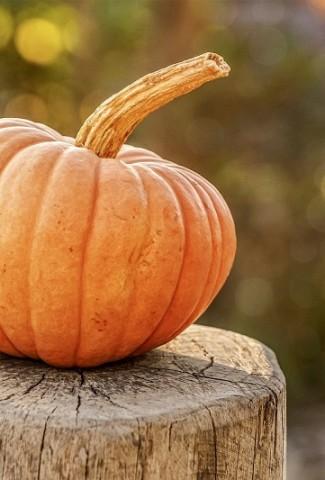 Pumpkin Spice Tea Recipes Pumpkin on a Tree Stump