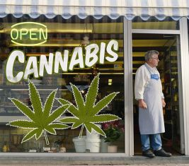 response to cannabis petition