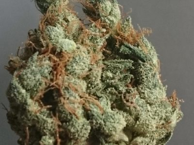 tangie strain review
