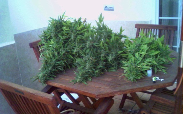 Three plants? Why, that's a cannabis farm. Photo: Fotoblog Rare