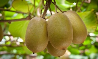Ex-Kiwifruit contractor to pay $276,000 for exploiting migrant workers