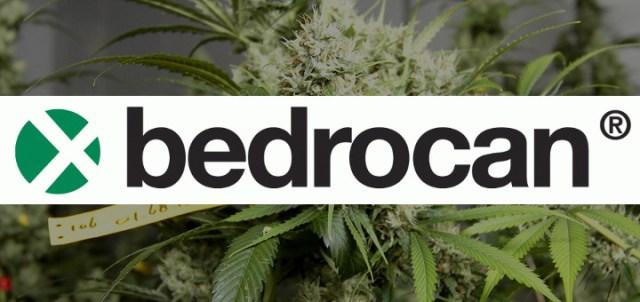 Bedrocan, fournisseur européen de cannabis médical