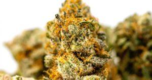 Cannabis en 2020