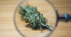 Rapport sur la légalisation du cannabis au Colorado