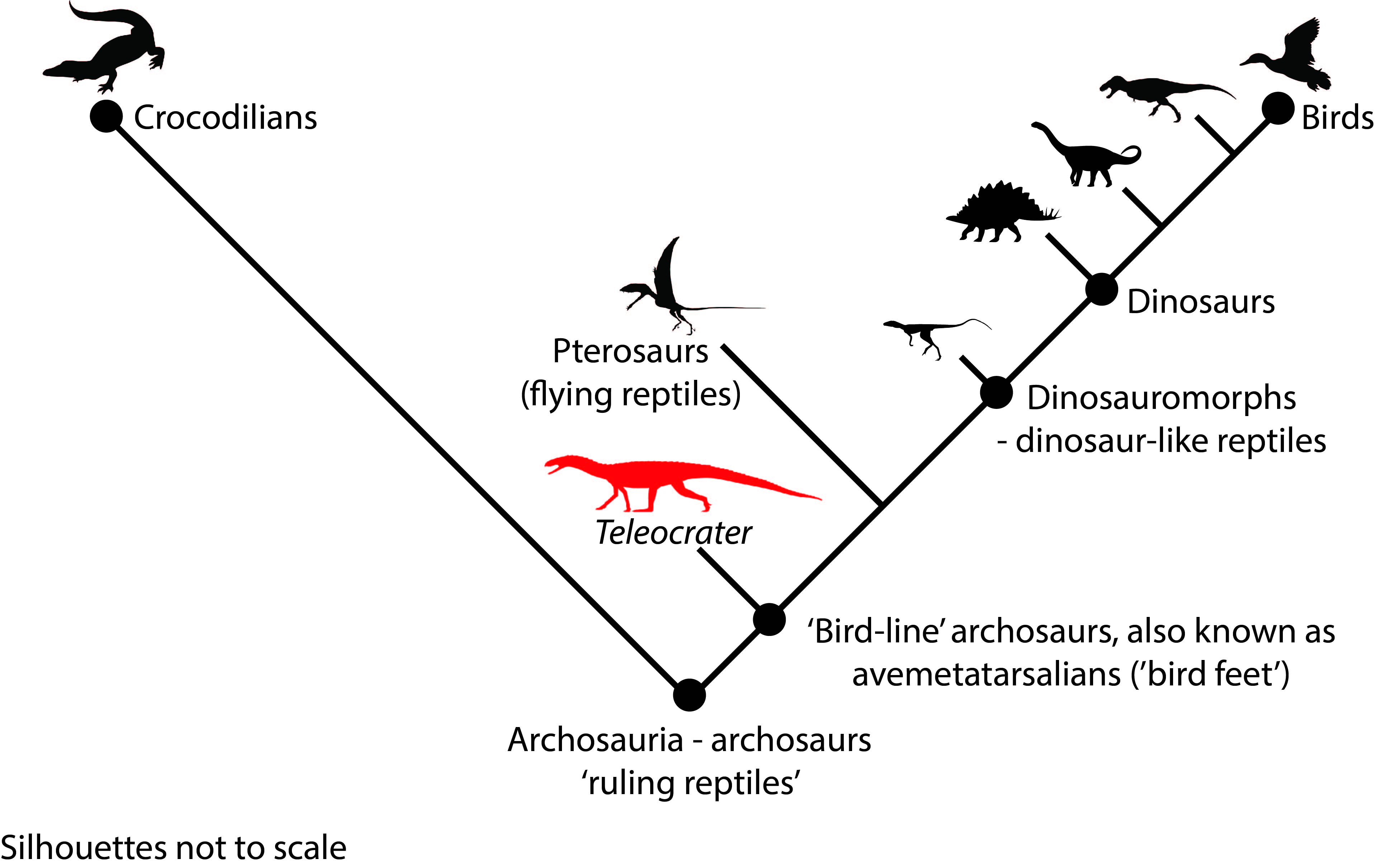 Discovery Of Early Croc Like Reptile Sheds New Light On