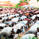 'Why Muslims rejected Health Examination Board's timetable'