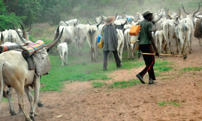 Why cattle rearing wasn't  fashionable among Southerners