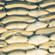 Sugar: FG assesses BUA, Dangote, others