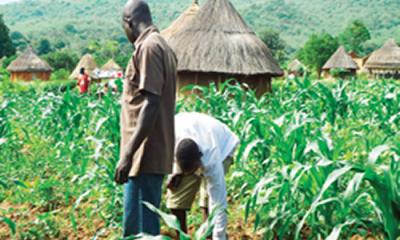 Flour millers distribute N150m seeds to farmers