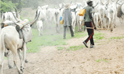 Herdsmen attacks: 80,000 displaced children out of school in Benue – SUBEB