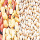 'Rejection of cowpea to cost Nigeria $46m'