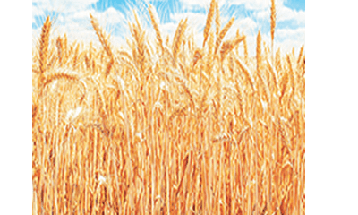 Storage inputs as antidote for food security