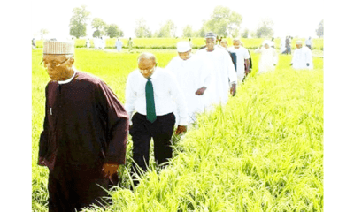 Nigeria's rice self-sufficiency target jinxed