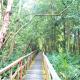 Lekki conservation centre: mixture of mother nature, adventure
