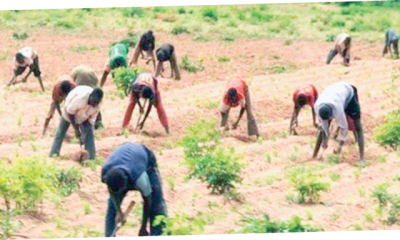 How banditry, kidnapping wiped out farmers' income in  North-West