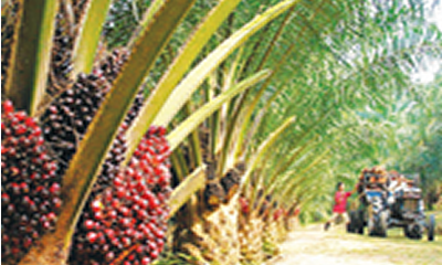 Presidential order: Towards boosting local palm oil production