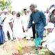 Reviving tree planting culture
