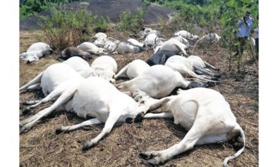 Lightning kills 36 cows on Ondo community's sacred mountain