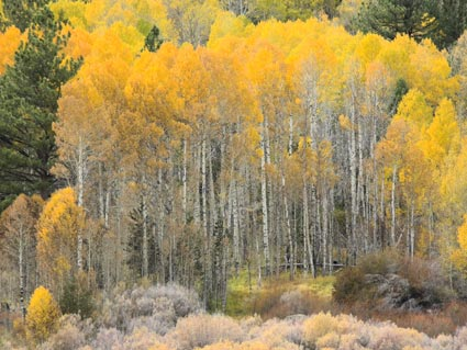 Fall in Hope Valley, Sierra Nevada mountains