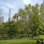 Central Park Guide: Top Places to Visit, Food, Activities & more
