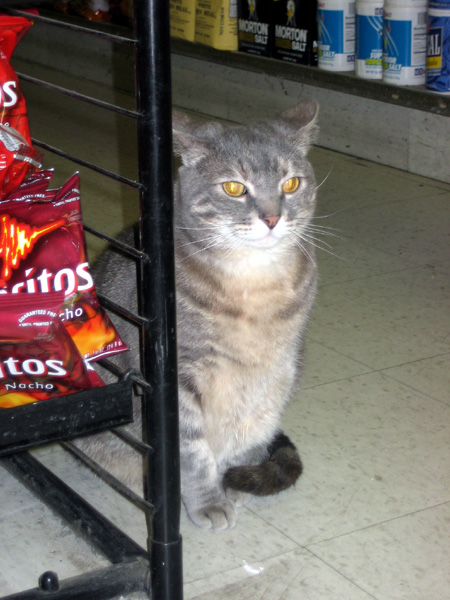 Julie guarding the Doritos