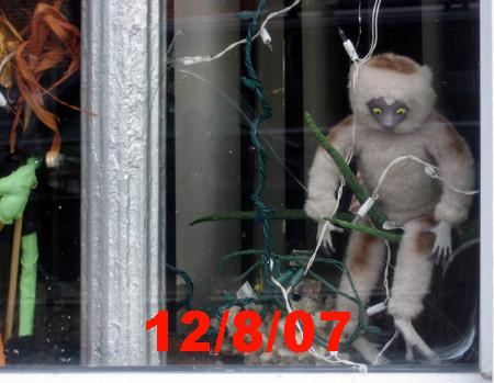 Lemur 12/8/07