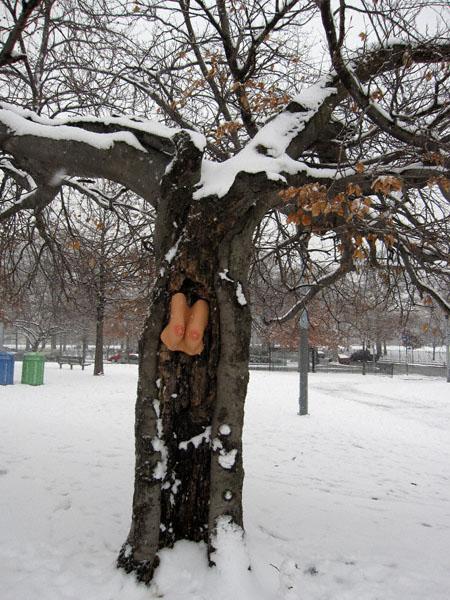 tree-tits