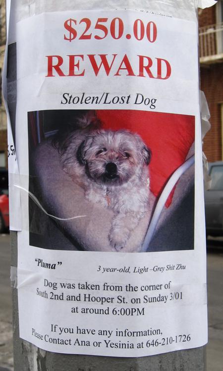 stolendognys